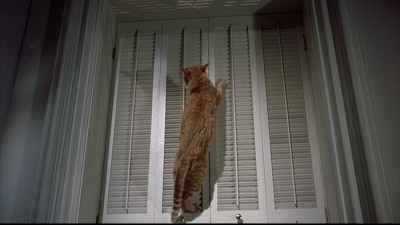 Awesome cat climbing in Breakfast at Tiffany's